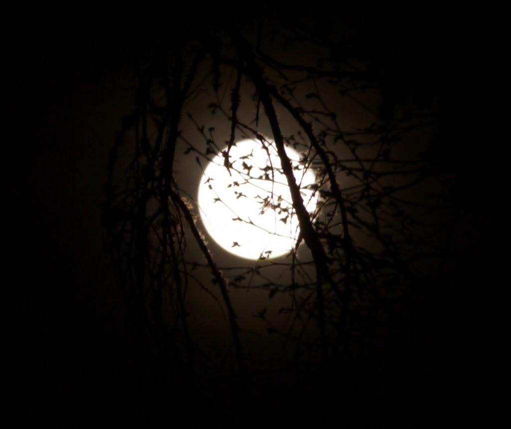 Moon-03