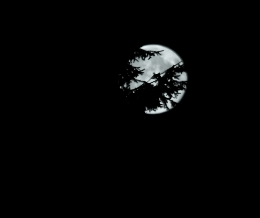 Moon-016nf