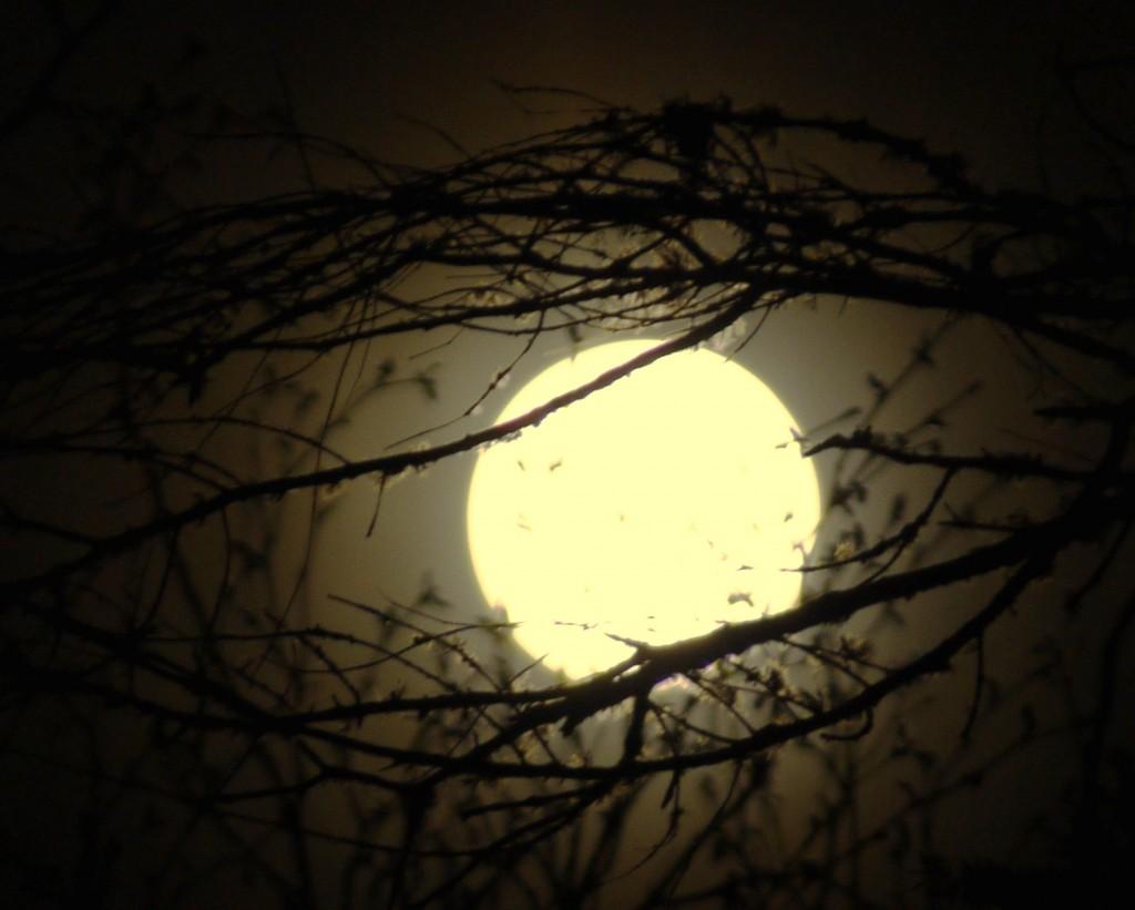 Moon-08