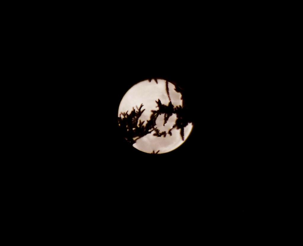 Moon-15nf