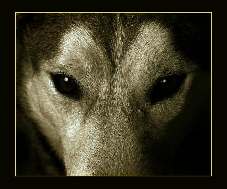 wolf-02